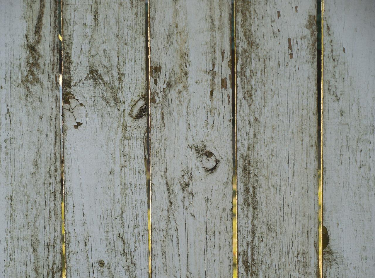 Se débarrasser des champignons sur le bois