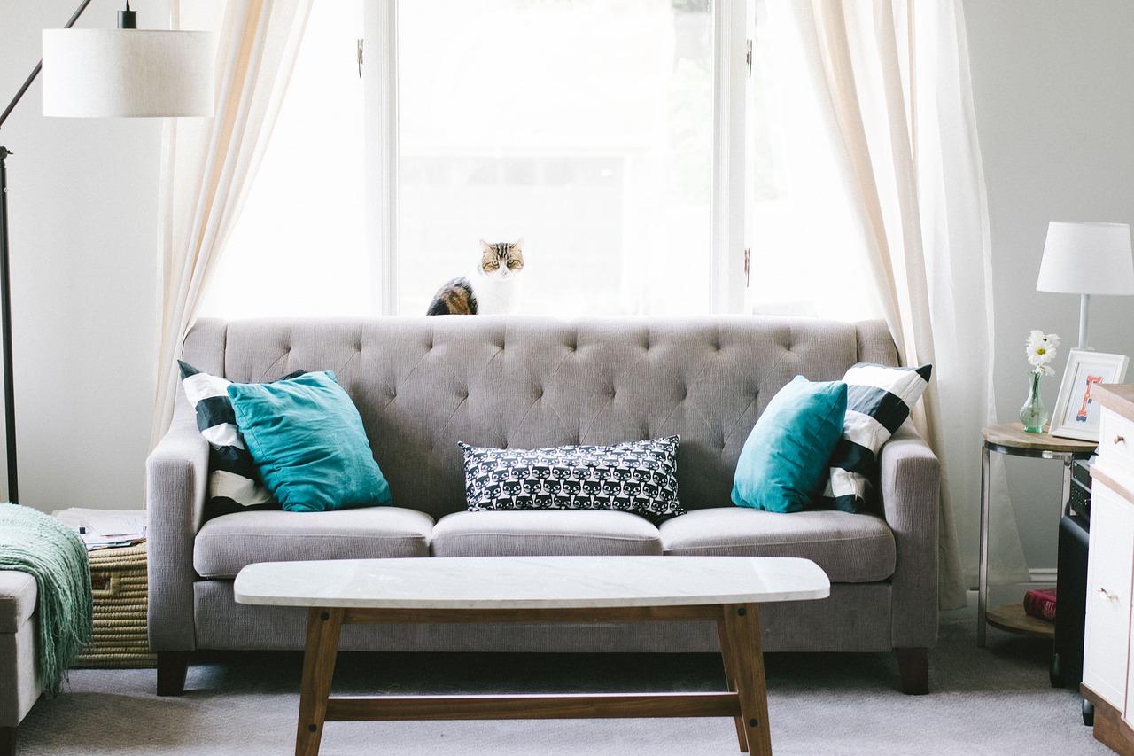 salon avec canapé gris et coussins noir et blanc et bleu table basse et chat sur le canapé